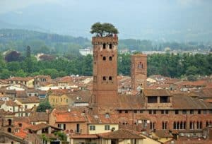 View over Torre Guinigi, a historical tower of the city of Lucca