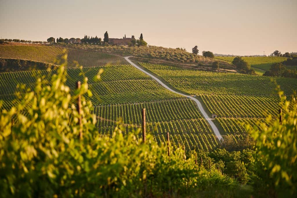 Tuscan vineyard landscape how To Plan the Perfect Tuscan Vineyard Wedding